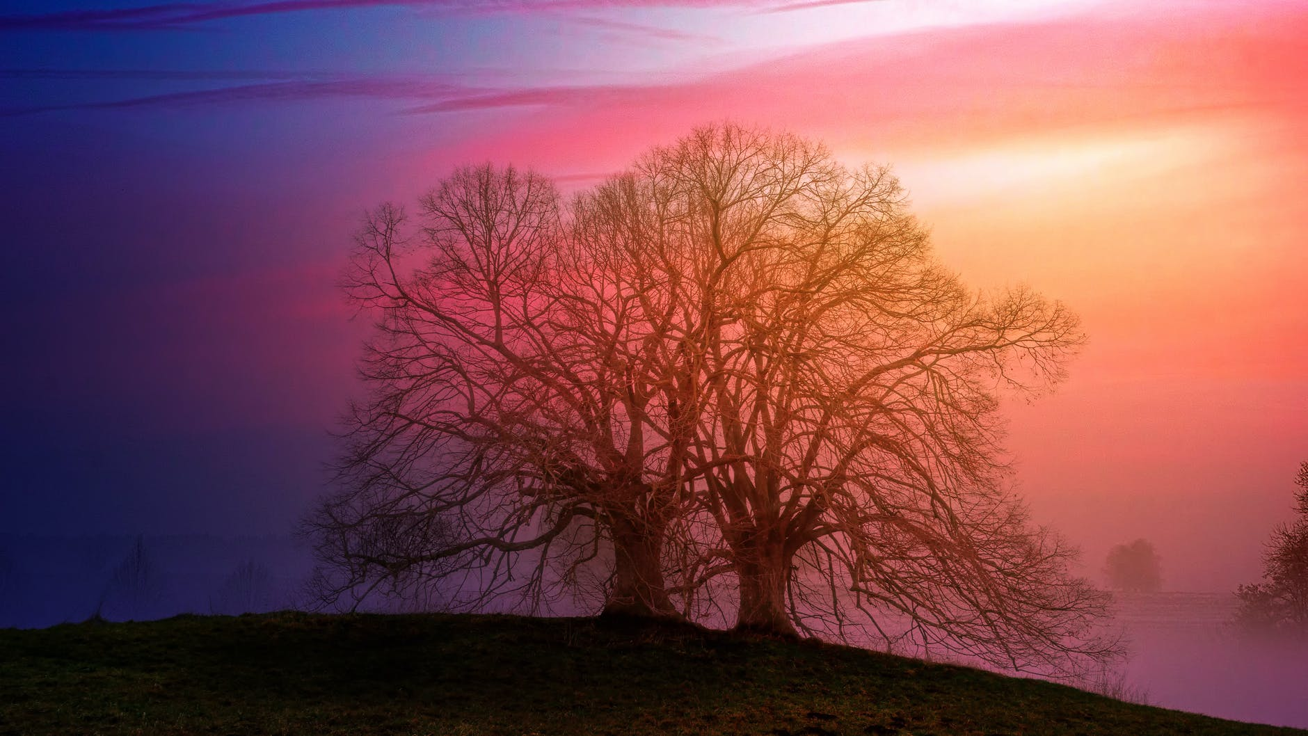two bare trees beside each other during sunset